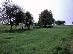 Sečení trávy - 30.5.2015